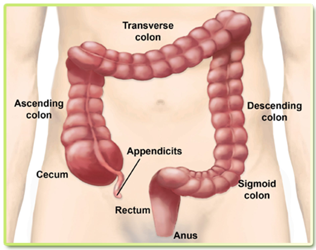 Vitality And Health About Colonic Irrigation